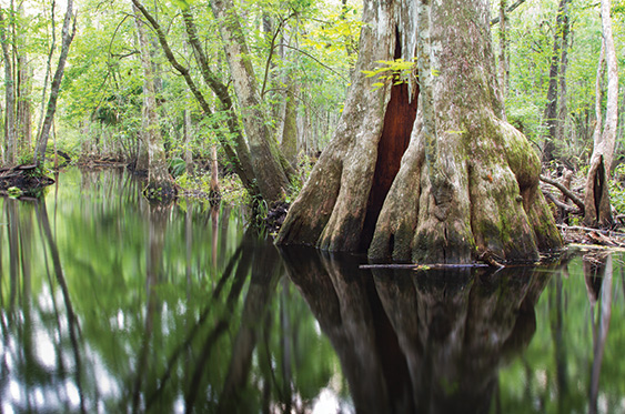 Wetland swamp animals