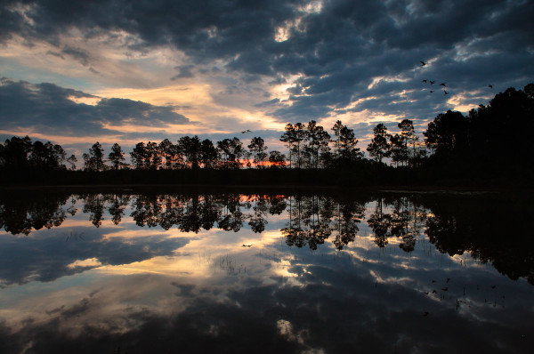 John Spohrer captures the color and light of the sunrise over a pond within the Camp Blanding-Raiford Greenway.