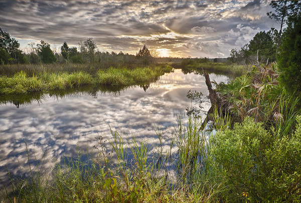 HDR allows for a full template of color to complement extraordinary reflection in Critical Linkages Photographer Will Dickey's photograph of the Northeast Florida Timberlands and Watershed Reserve.