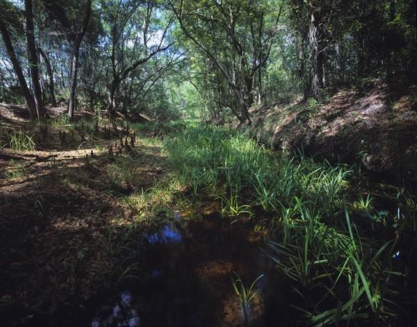 Etoniah Creek, the lifeblood of the Etoniah/ Cross Florida Greenway, flows calmly under the lens of Critical Linkages Photographer James Valentine.