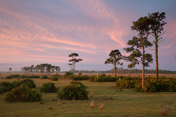 With cows in the distance, Critical Linkages Photographer David Moynahan captures the rosy glow of sunrise over the Kissimmee-St. John's River Connector. United with surrounding conserved areas, this landscape provides habitat to much more than cows.