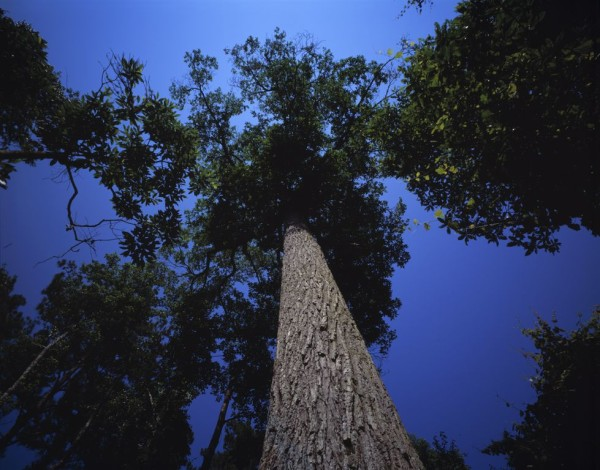 Critical Linkages Photographer James Valentine literally bends over backwards to capture this stunning view of this loblolly bay, the pride and joy of the Etoniah Creek State Forest, a section of the Etoniah/ Cross Florida Greenway.