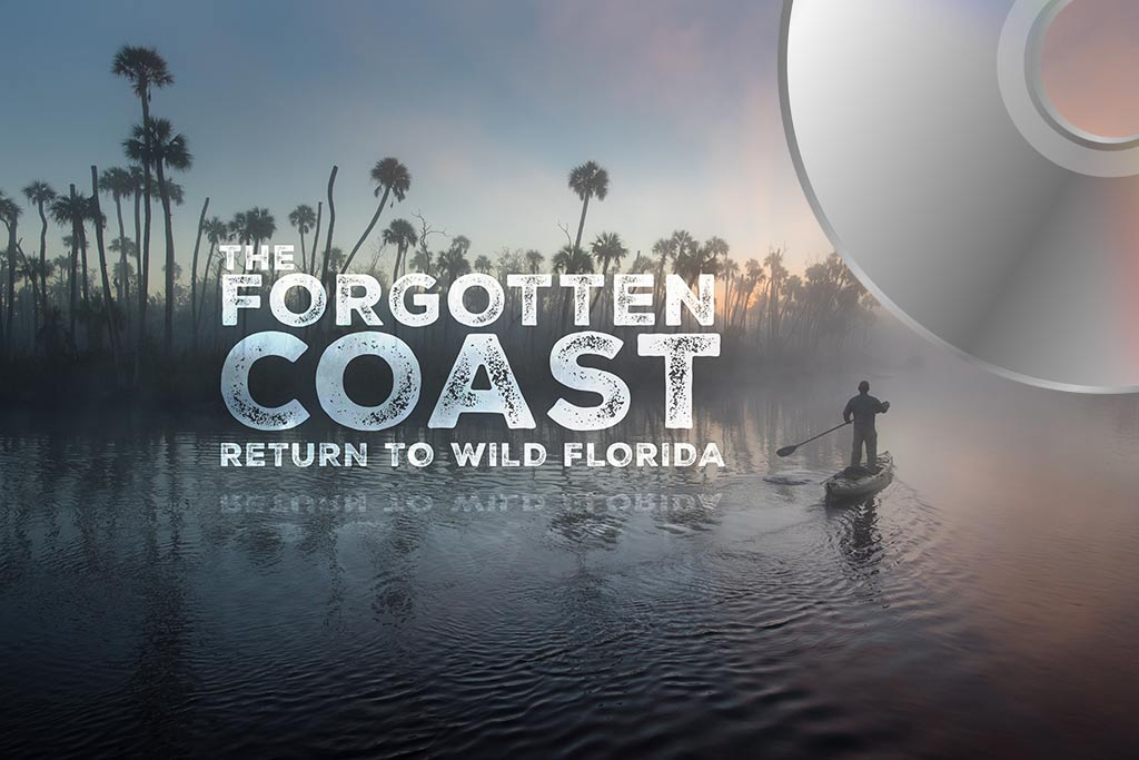 the forgotten coast