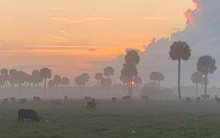 Cow Creek Ranch